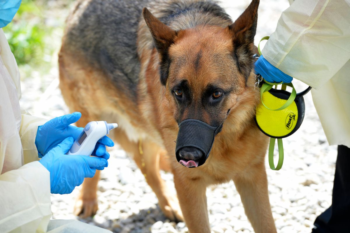 FDA warns dog and cat owners can give coronavirus to their pets 1