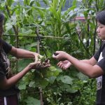 AP PHOTOS: India's lockdown spurs new gardeners in Nagaland 2
