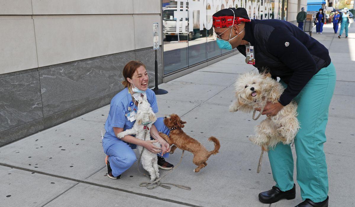 The one big winner amid the coronavirus shutdown: pets 1