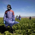 Without Federal Protections, Farm Workers Risk Coronavirus Infection To Harvest Crops 6