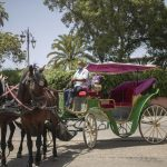 Morocco's carriage horses suffer as COVID-19 bars tourists 12
