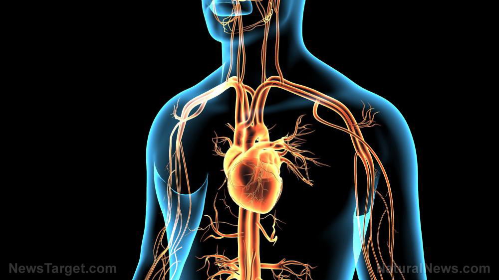 Coronavirus can break your heart – literally – says new study 1