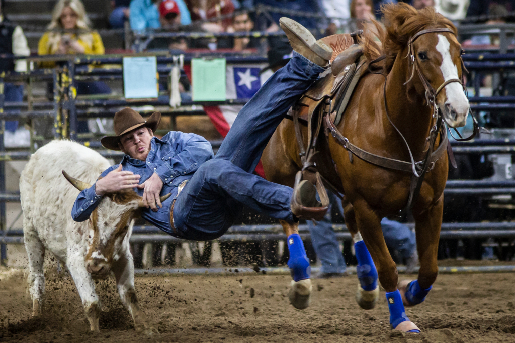 National Western Stock Show 2021 canceled due to COVID-19 pandemic 1