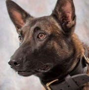 RIP, Titan: Pennsylvania police mourn K-9 officer that 'died honorably' during a burglary search 1