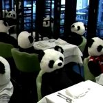 German Restaurant Protests Pandemic Lockdowns With Stuffed Pandas 8