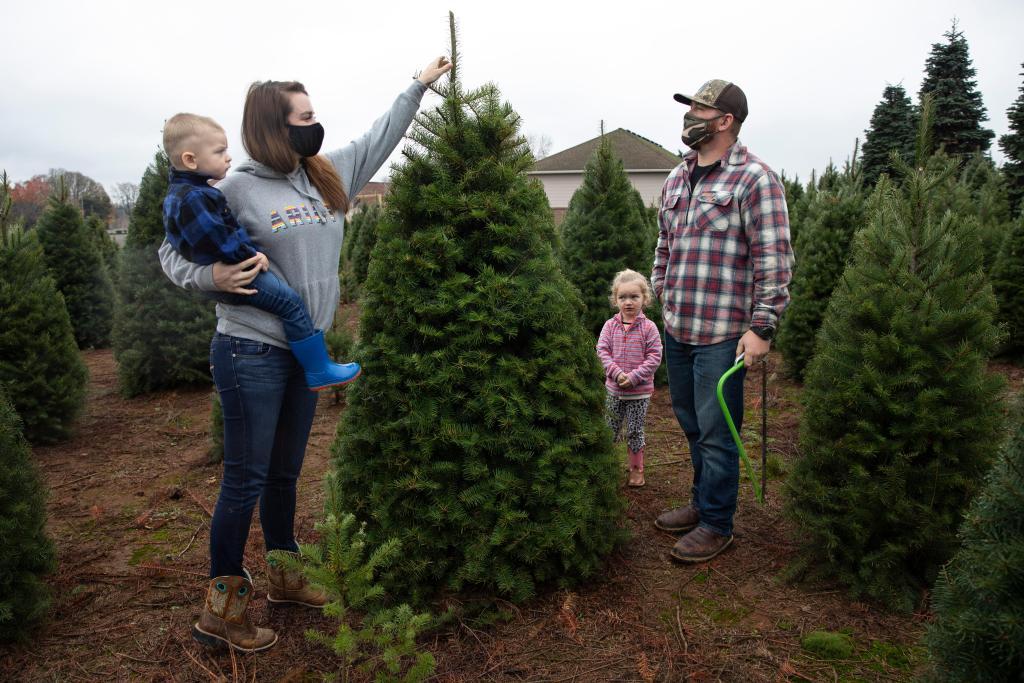 Many Americans turning to real Christmas trees as bright spot amid coronavirus 1