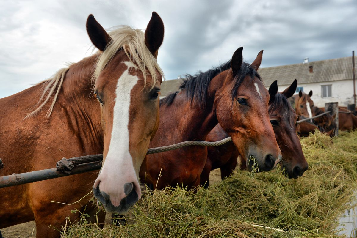 Construction company office manager accused of embezzling $2.3 million for horse farm 1