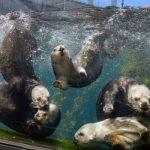Monterey Bay Aquarium announces reopening date 3