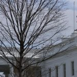 Biden orders White House flags lowered to half-staff after Capitol Police officer killed 6