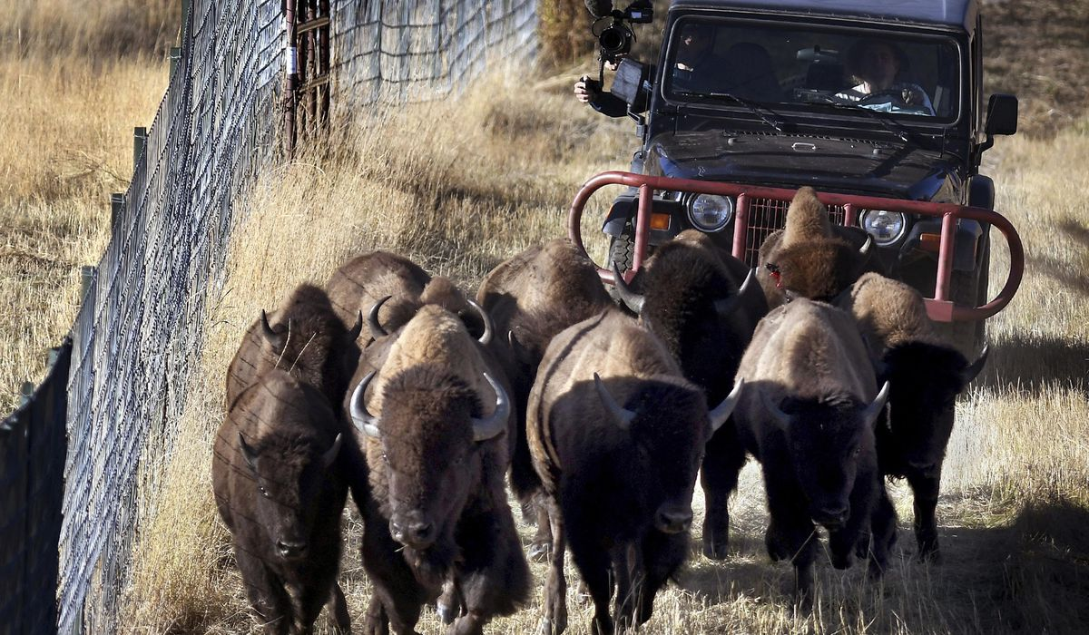 Fees increase as Bison Range opens under tribal management 1