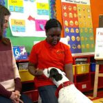 Comfort dogs in NYC schools transform learning experience 8