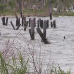 Eye Opener: Tropical Storm Claudette brings rain, floods to Gulf Coast 1