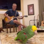 Parrot named Tico belts out classic rock hits like a total legend 5