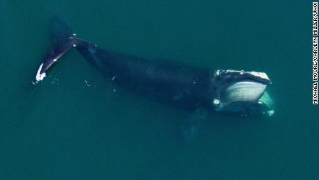 Norway to proceed with sound experiment on whales, despite protests 1