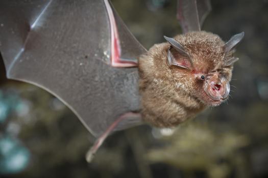 Pandemic origins debate: Researchers find batch of new coronaviruses in bats 1