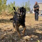 K9 Officer Stabbed 3 Times, Survives; His Attacker Was Not So Lucky 5