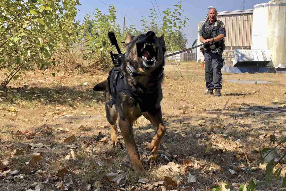 K9 Officer Stabbed 3 Times, Survives; His Attacker Was Not So Lucky 1