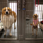 Dogs fill shelters as pandemic lockdowns ease 8