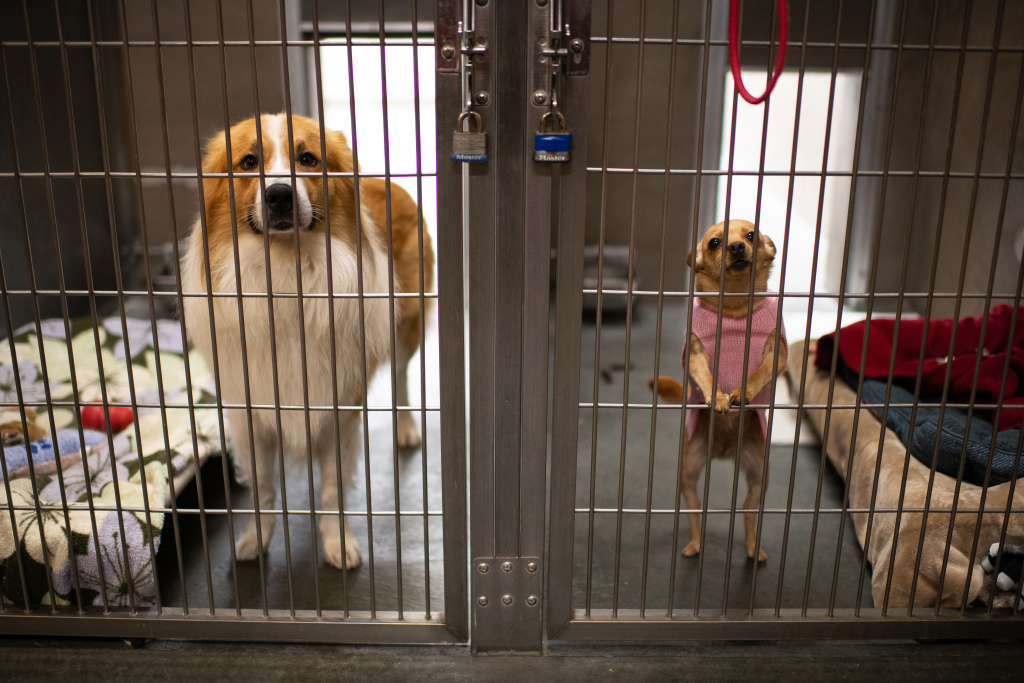 Dogs fill shelters as pandemic lockdowns ease 1
