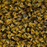 5,000 Bees Kill Two Dogs, Sting Ex-Police Officer 40 Times: 'There Was Nothing I Could Do' 8