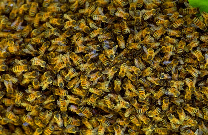 5,000 Bees Kill Two Dogs, Sting Ex-Police Officer 40 Times: 'There Was Nothing I Could Do' 1