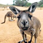 How Stupid Is Australia? While Many Nations Are Re-Opening From 'Lock-Down' Conditions 13
