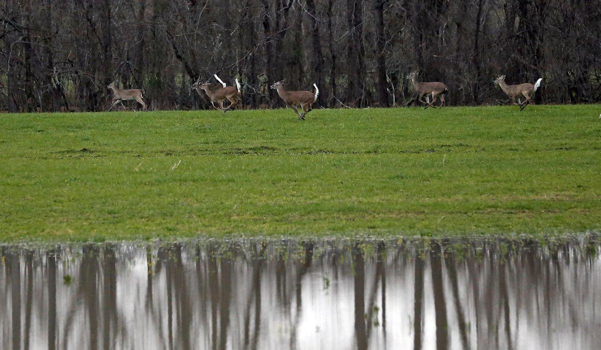 40% of wild deer have coronavirus antibodies, new study finds 1